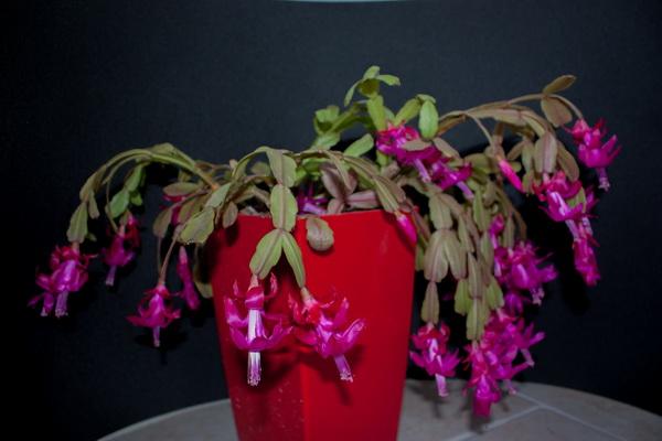 Ma petite collection de Cactus 1