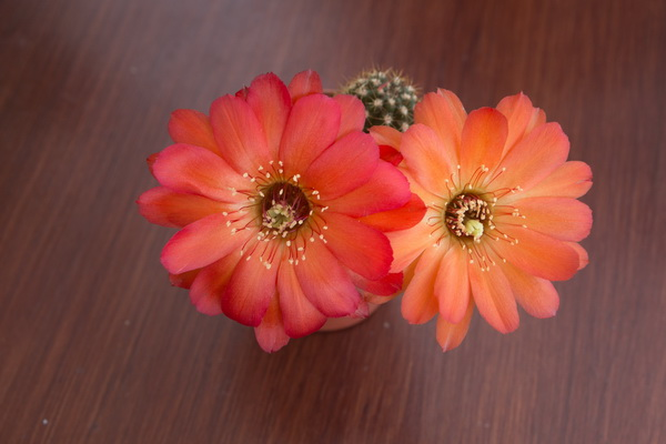 Ma petite collection de Cactus 17