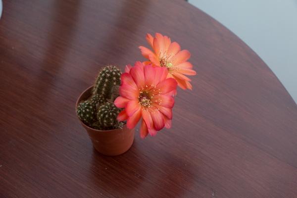 Ma petite collection de Cactus 18
