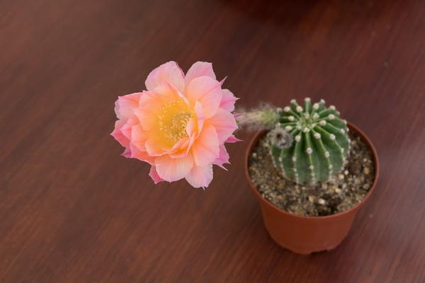 Ma petite collection de Cactus 22