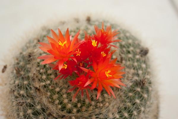 Ma petite collection de Cactus 3