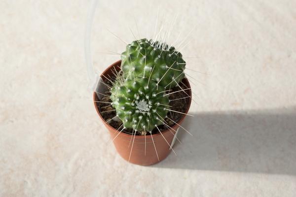 Ma petite collection de Cactus 6